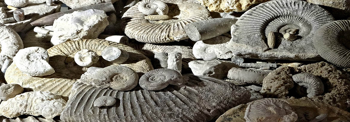 Collecting and hunting for fossils in Dordogne